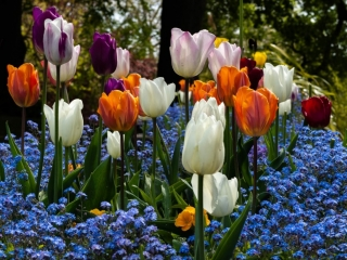 thumbnail_Tulips-at-Cliffe-Castle